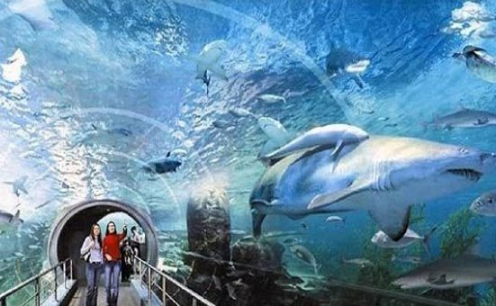 Siam Ocean World Bangkok